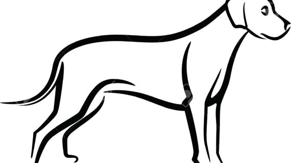 570x320 Silhouette Dog Head Husky Stock Photos Silhouette Dog Husky Dog