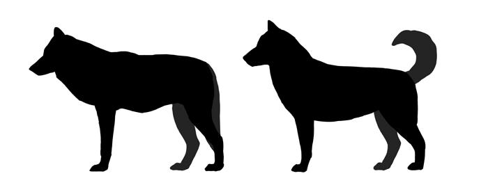 Husky Silhouette