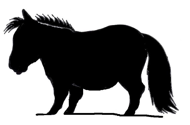 729x479 Minature Horse Clipart