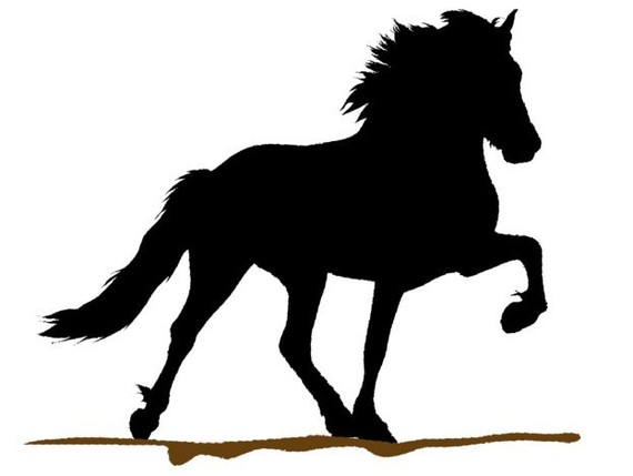 570x429 Pin By Ant On Tattoo Icelandic Horse, Clipart