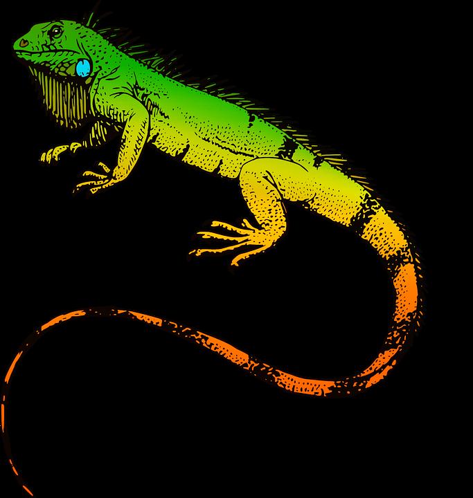 683x720 Iguana Png Transparent Iguana.png Images. Pluspng