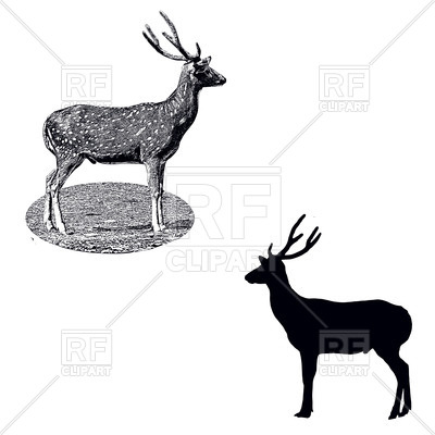 400x400 Standing Spotted Deer