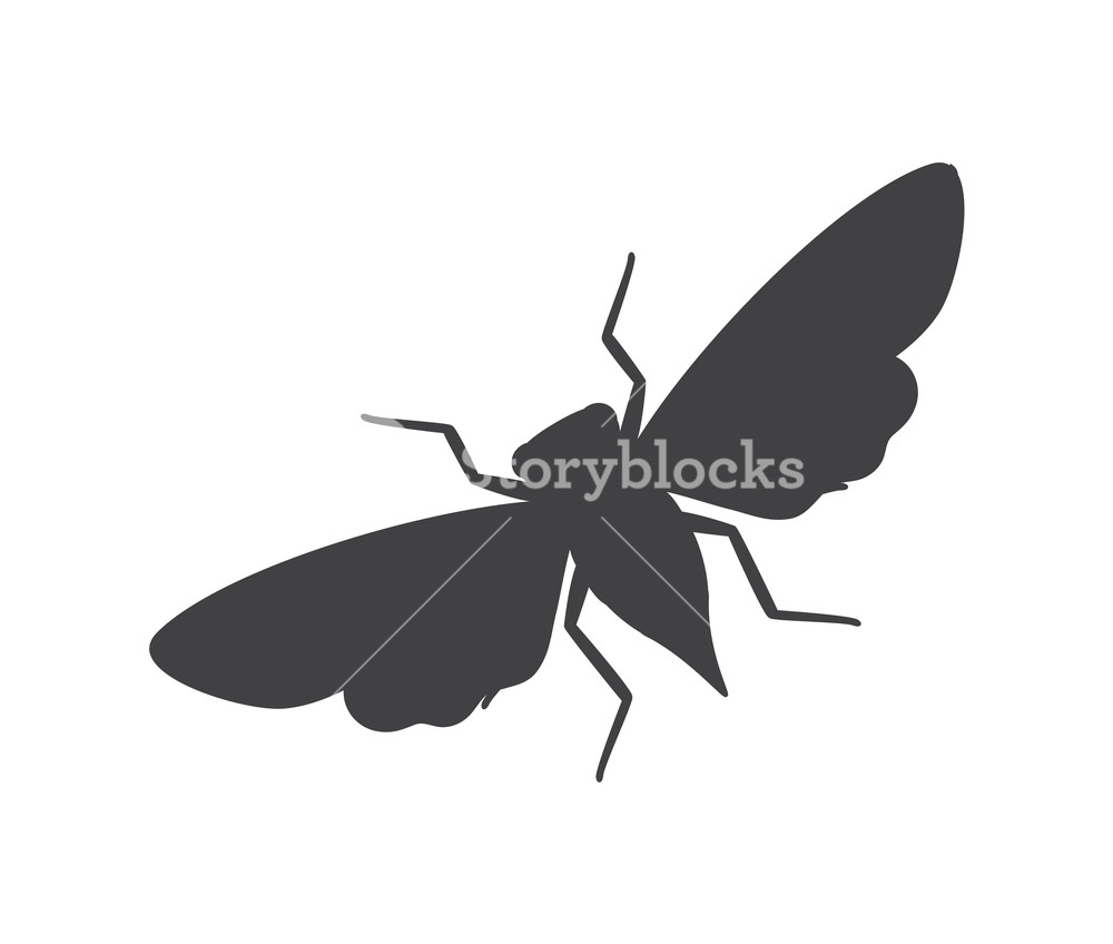 1000x848 Cicada Moth Insect Silhouette Vector Illustration Royalty Free