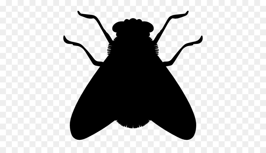 900x520 Insect Fly Icon