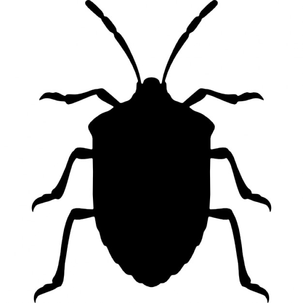 626x626 Stink Bug Insect Shape From Top View Icons Free Download