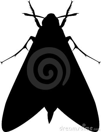 345x450 Moth Insect Silhouette 7660389.jpg Clipart Panda