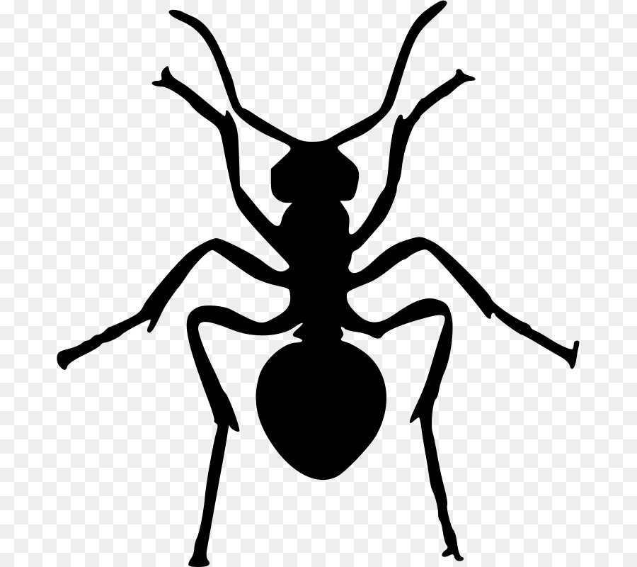 900x800 Ant Insect Silhouette Clip Art