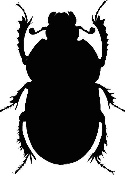 434x609 Beetle, Animal, Physical, Insect, Silhouette, Outline, Black, Bug