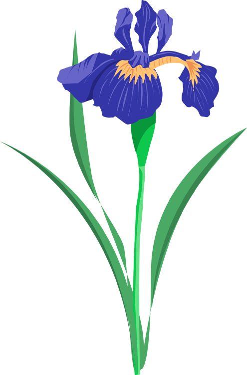 Iris Flower Silhouette