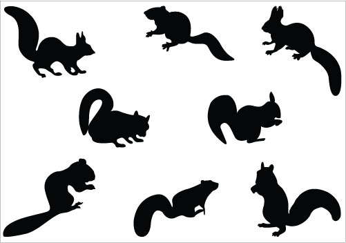 501x352 Squirrel Clipart Black And White