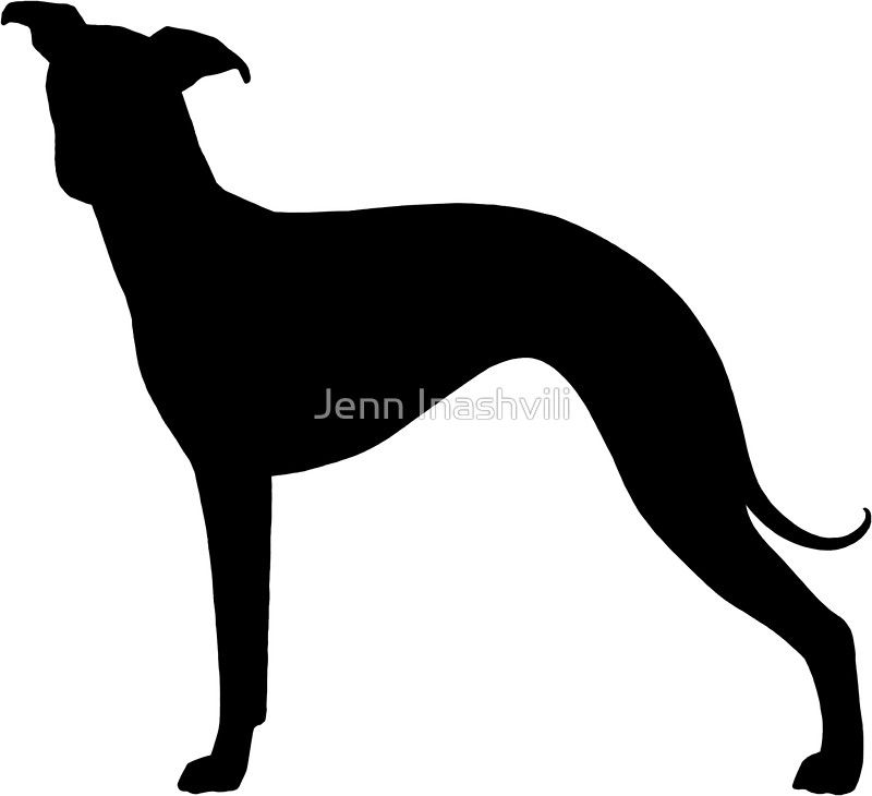 800x730 Italian Greyhound Silhouette(S)' Sticker By Jenn Inashvili