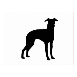 307x307 Italian Greyhound Silhouette Cards Amp Invitations Zazzle.co.uk