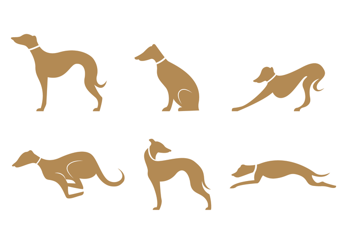 700x490 Gold Brown Whippet Silhouette Vector