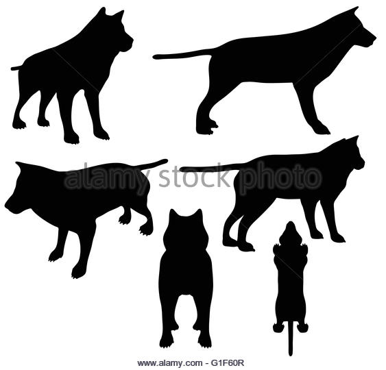 563x540 Illustration Jackal Black And White Stock Photos Amp Images