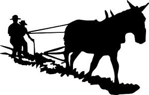 300x191 Mule Donkey Jackass Plow Field Rows Left Or Right Vinyl Decal