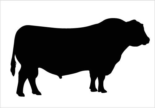 501x352 Bull Silhouette Vector Clipart Quality Download Silhouette