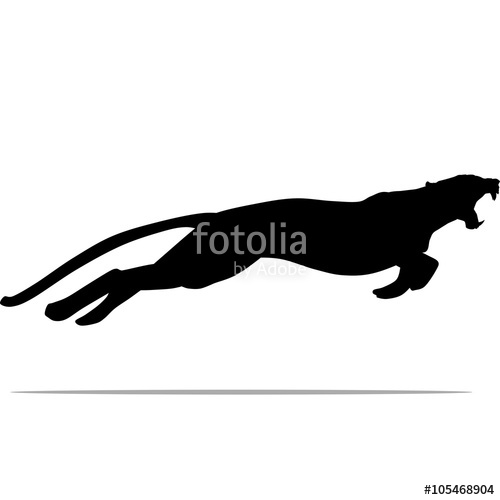 500x500 Puma With Huge Tusks Stock Image And Royalty Free Vector Files