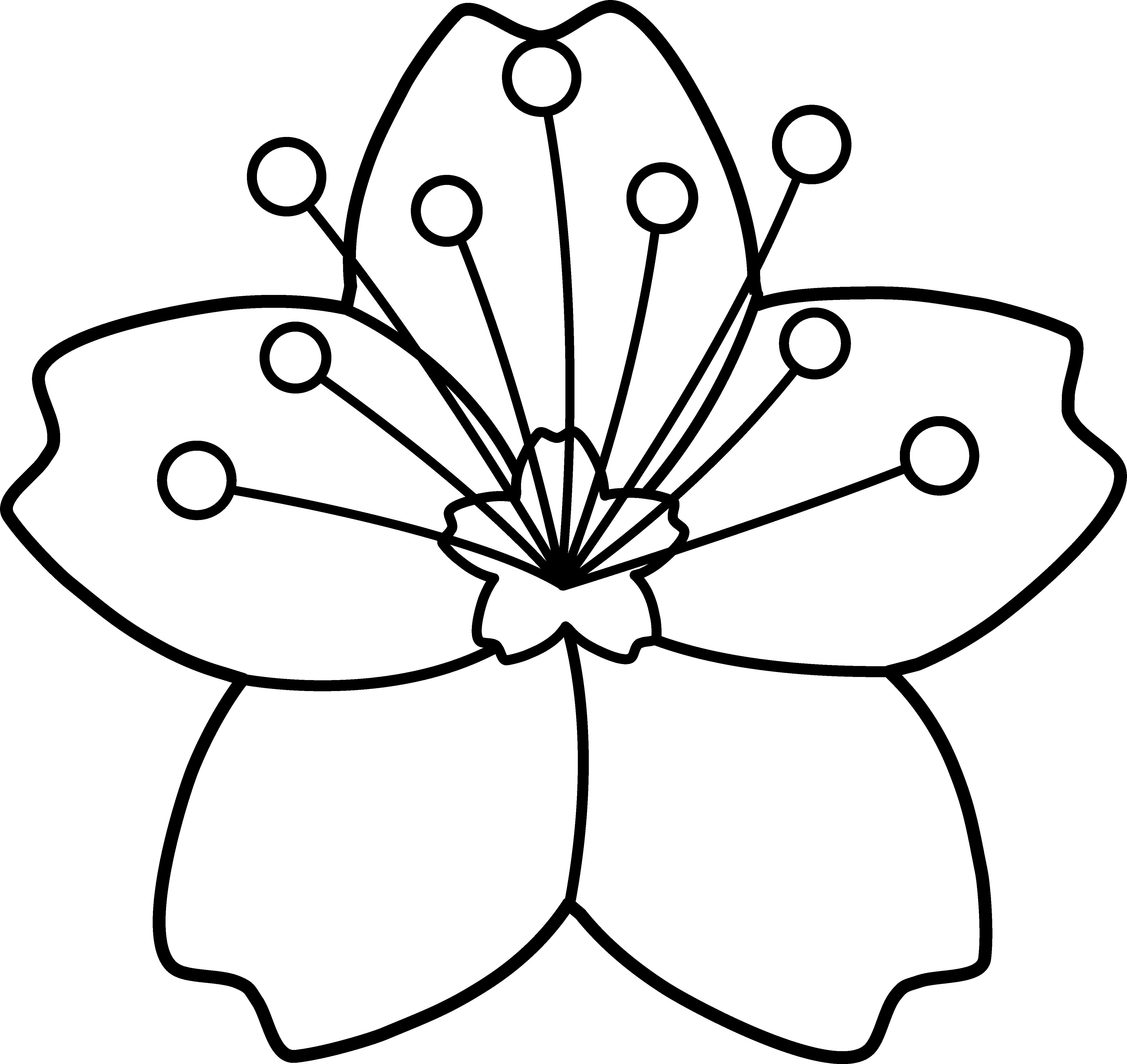 4724x4459 Cherry Blossom Line Art Embroidery Cherry Blossoms