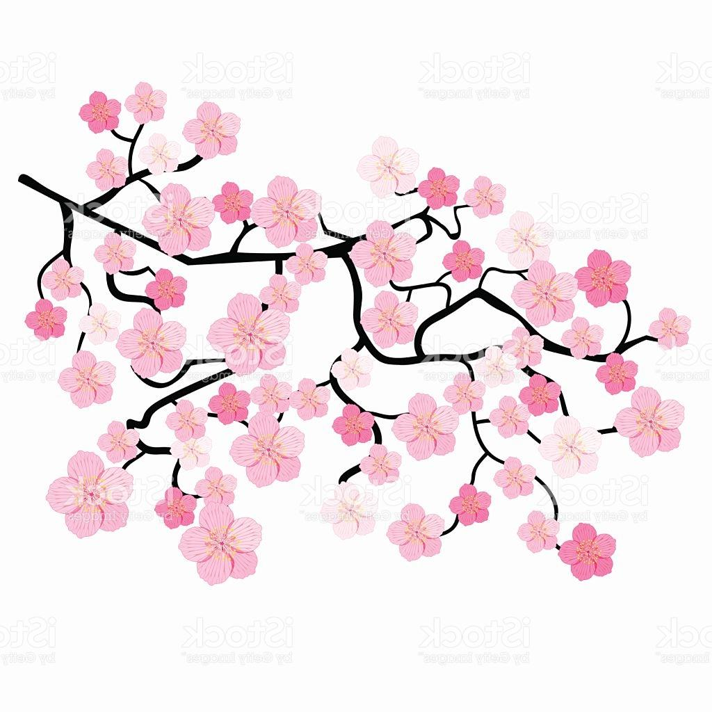 1024x1024 Top Branches Of Japanese Cherry Blossoms Vector Illustration File
