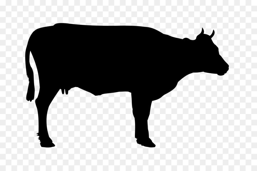 900x600 Welsh Black Cattle Holstein Friesian Cattle White Park Cattle Beef