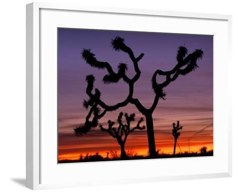 473x380 Joshua Trees