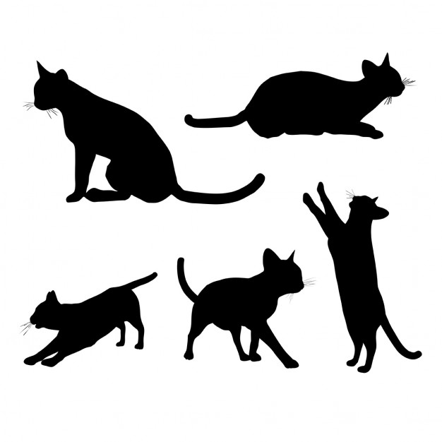 626x626 Jumping Cat Vectors, Photos And Psd Files Free Download