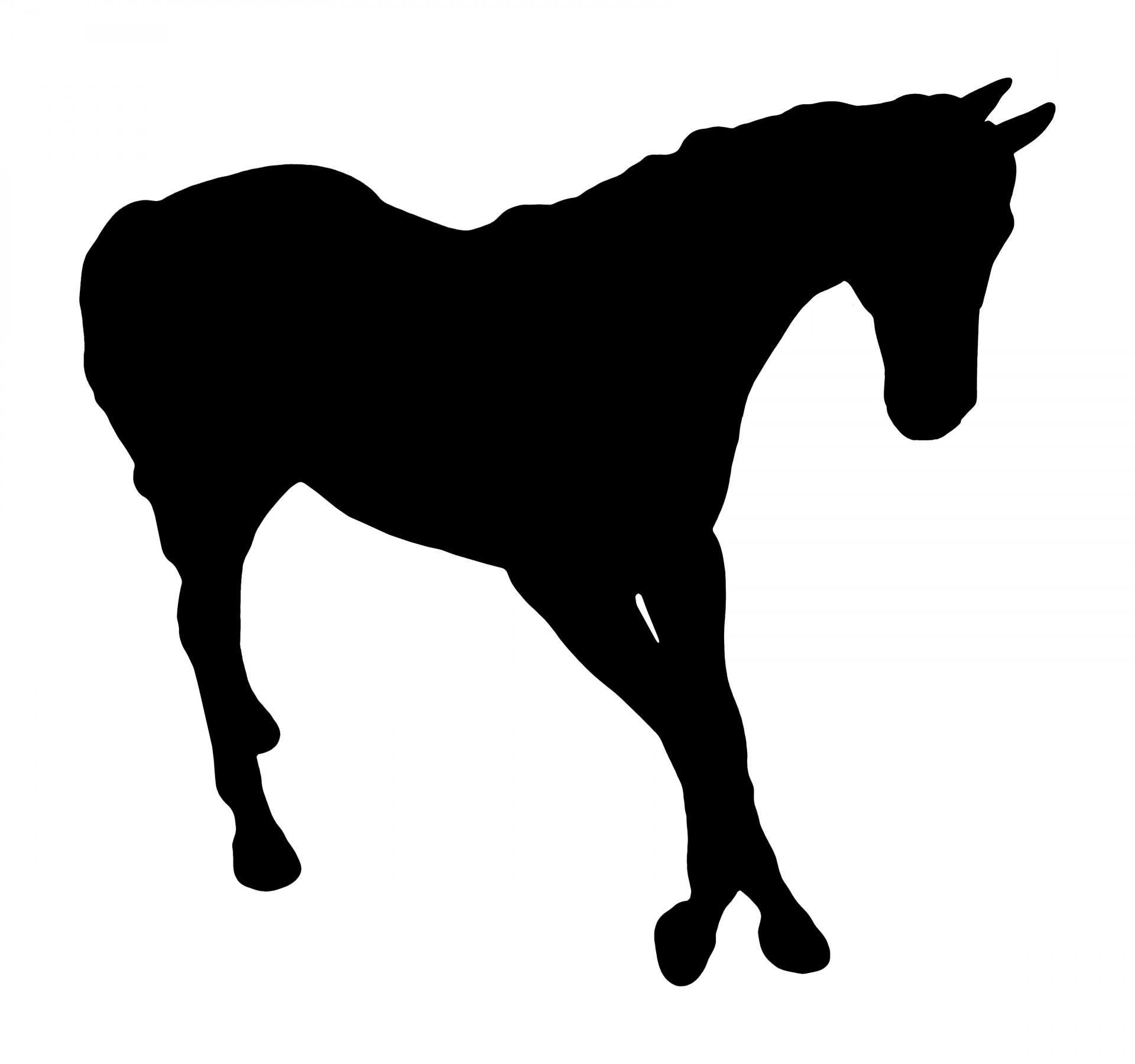1920x1800 Horse Silhouette Free Stock Photo