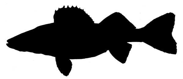 600x259 Walleye Silhouette Prints Fish Silhouette 2 Baby Boy Room