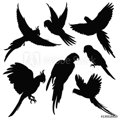 500x500 Vector Parrots, Amazon Jungle Birds Silhouettes Isolated On White