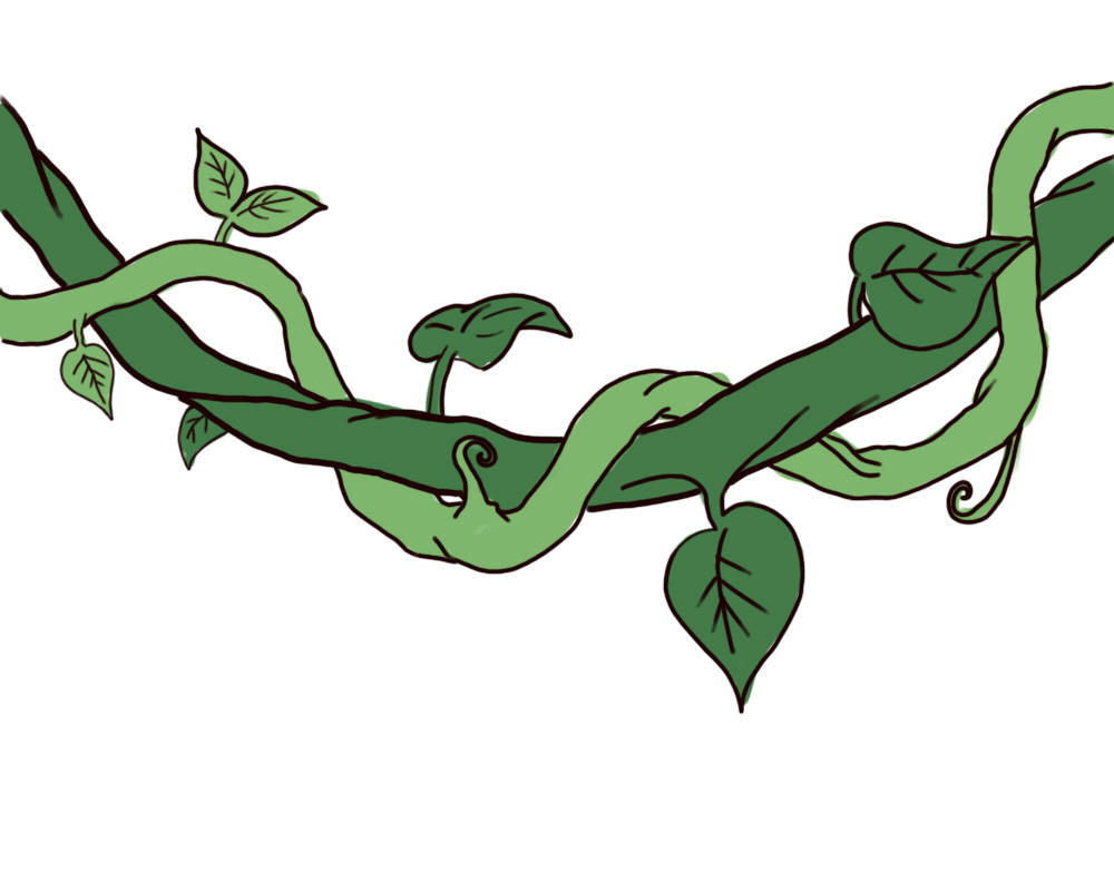 1000x800 Rainforest clipart rainforest vine