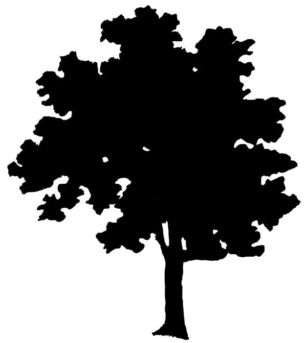 600x672 Simple Tree Silhouette Vectors