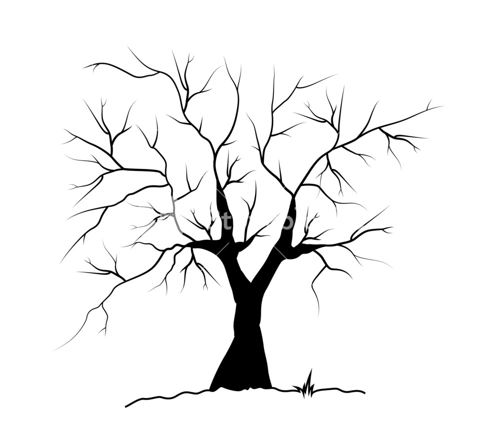 1000x889 Dead Tree Silhouette Royalty Free Stock Image