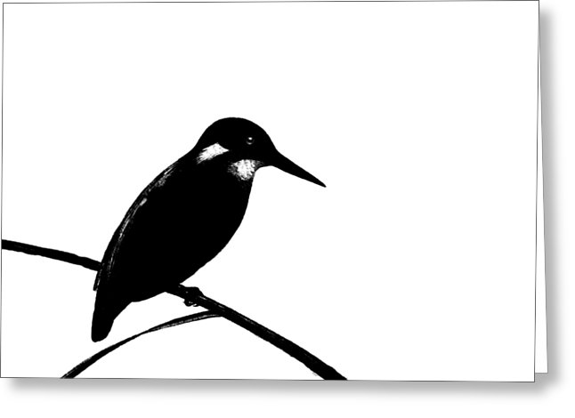 646x470 Kingfisher Birds Greeting Cards Fine Art America