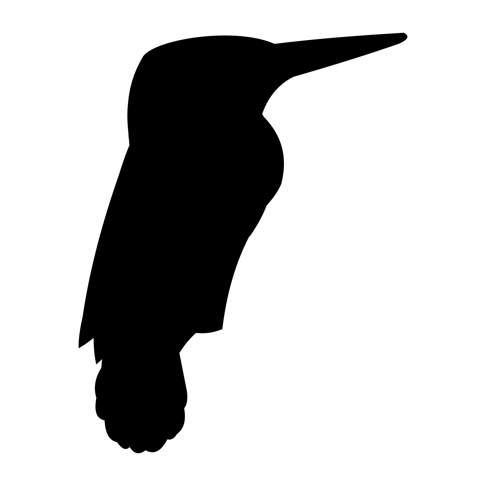 1920x1920 Kingfisher Free Stock Photo
