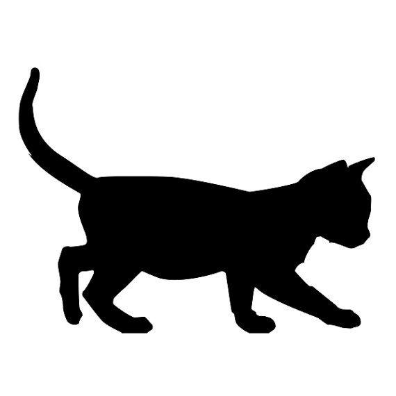 570x570 Kitten