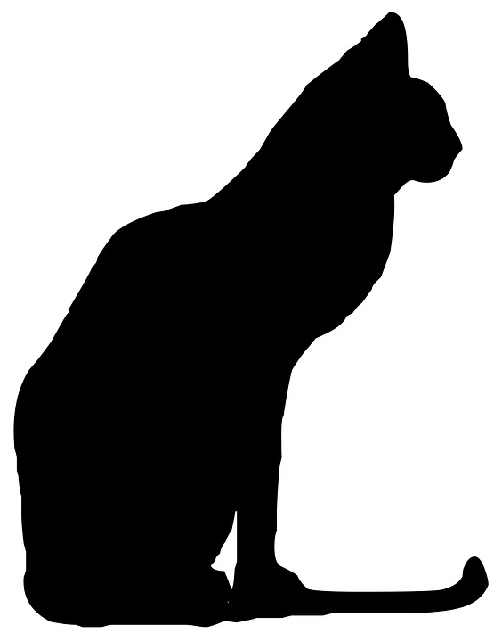 564x720 Free Photo Silhouette Cat Animal