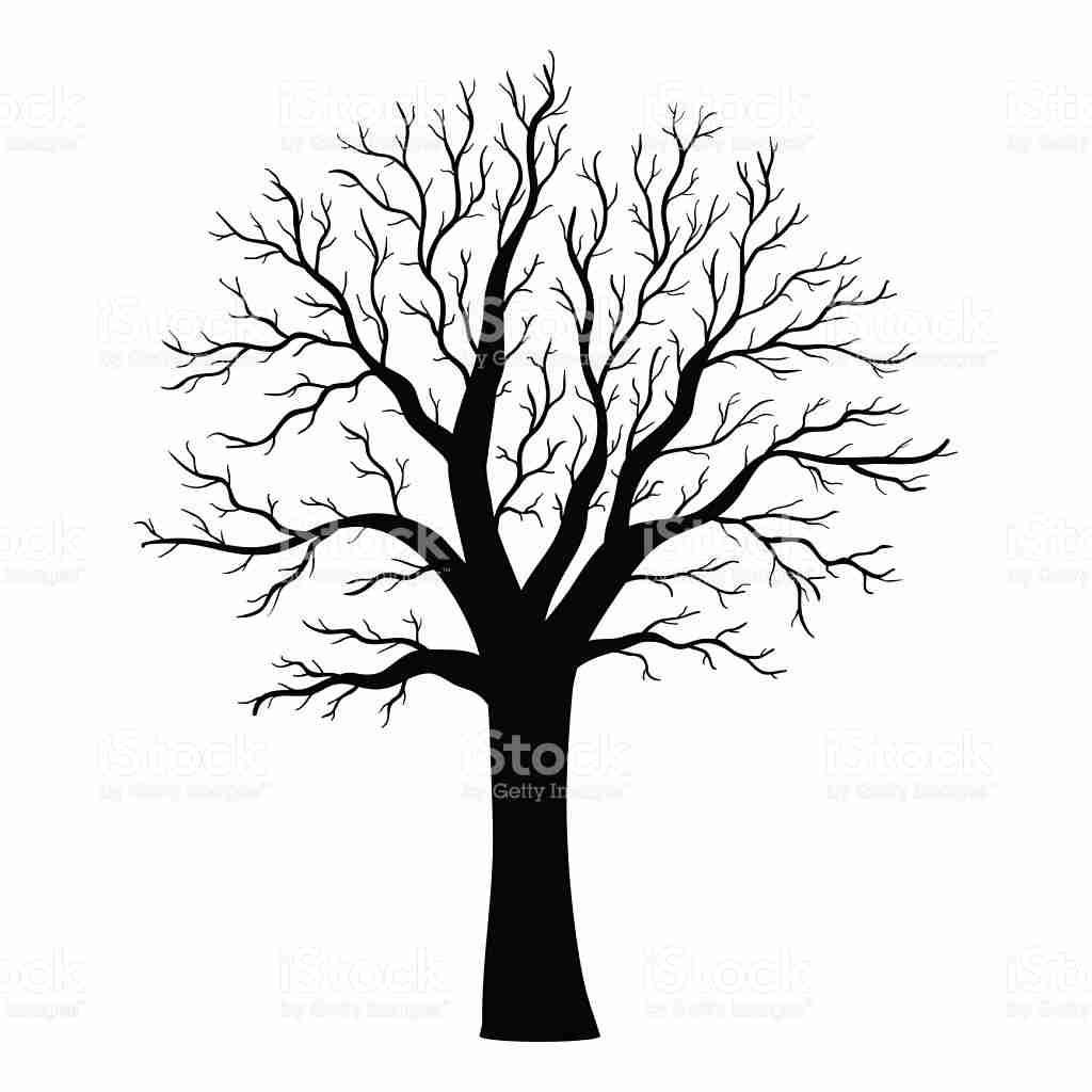 1024x1024 Vector Bare Old Dry Dead Tree Silhouette Without L Stock