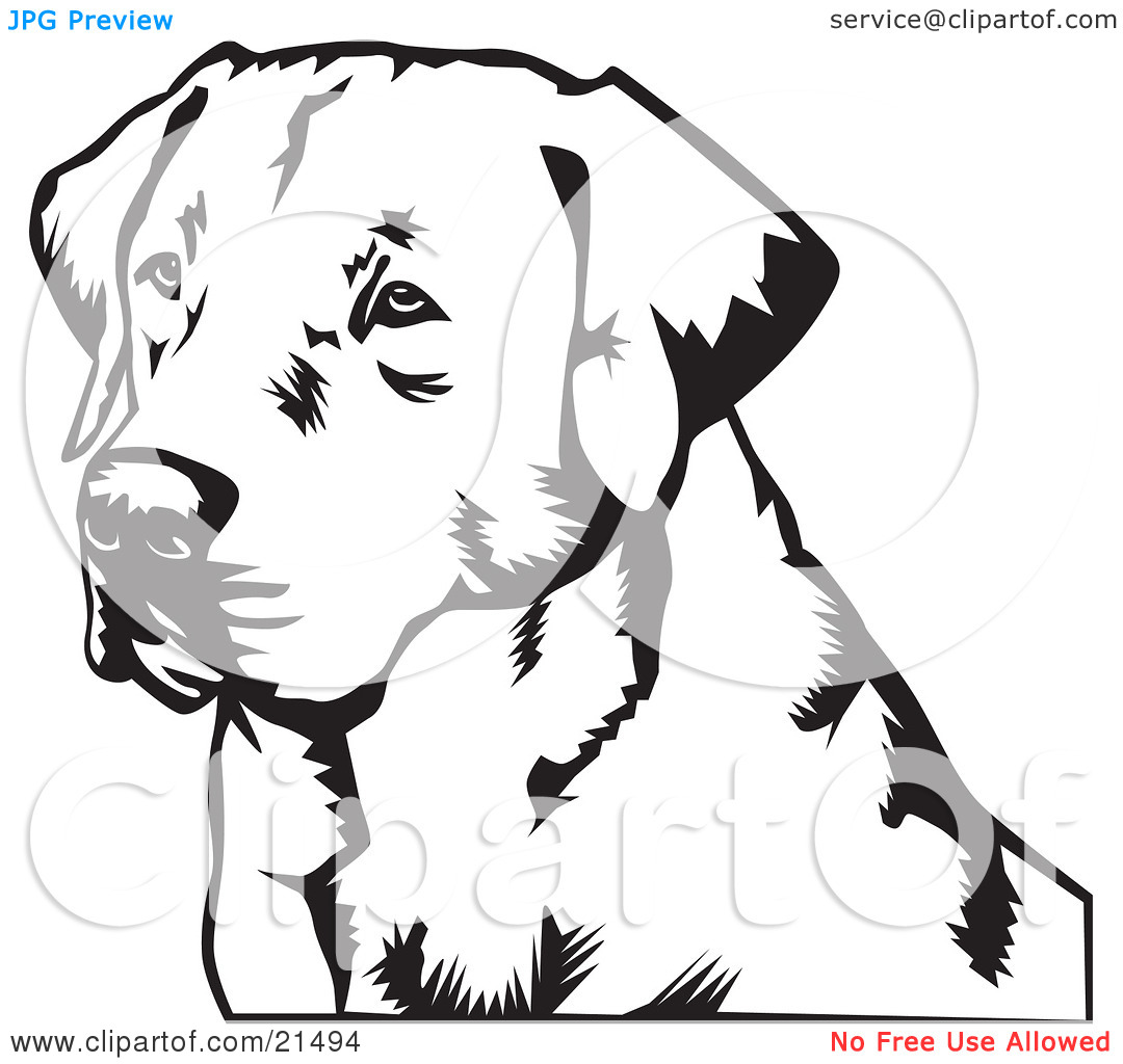 1080x1024 Retrievers Heads Clipart