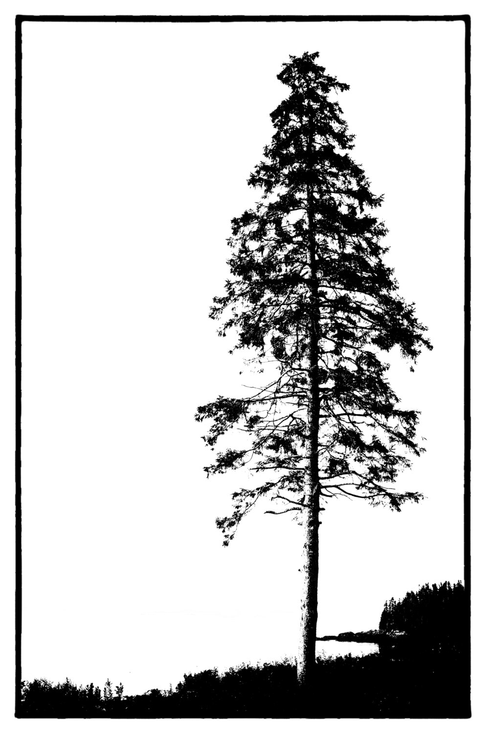 994x1500 Evergreen Trees With Water Landscape Black And White Clipart