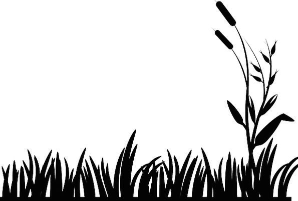 595x402 Cattails, Landscapes, Nature, Lawn, Grass, Nature, Countryside
