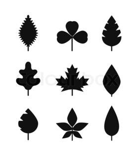 277x320 Leaves, Black Silhouettes Stock Photo Colourbox