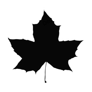 310x310 Maple Leaf Silhouette Coloring Page 2019