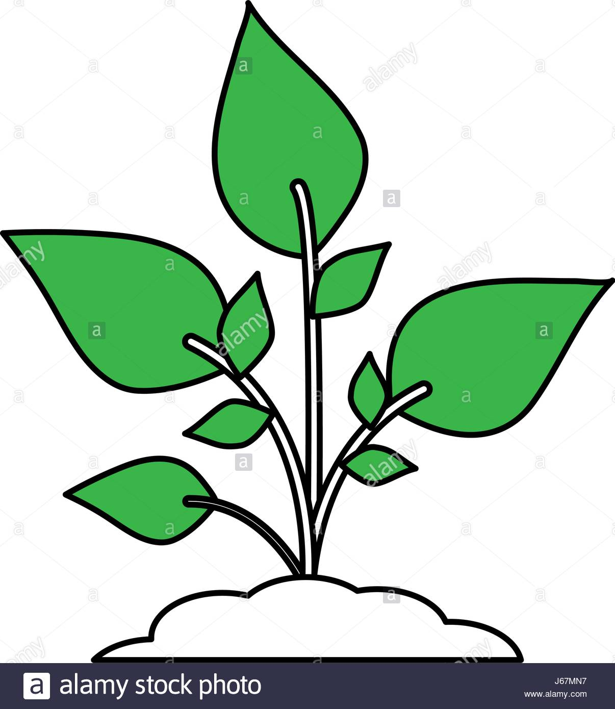 1206x1390 Color Silhouette Image Cartoon Green Plant With Leaves In Growth