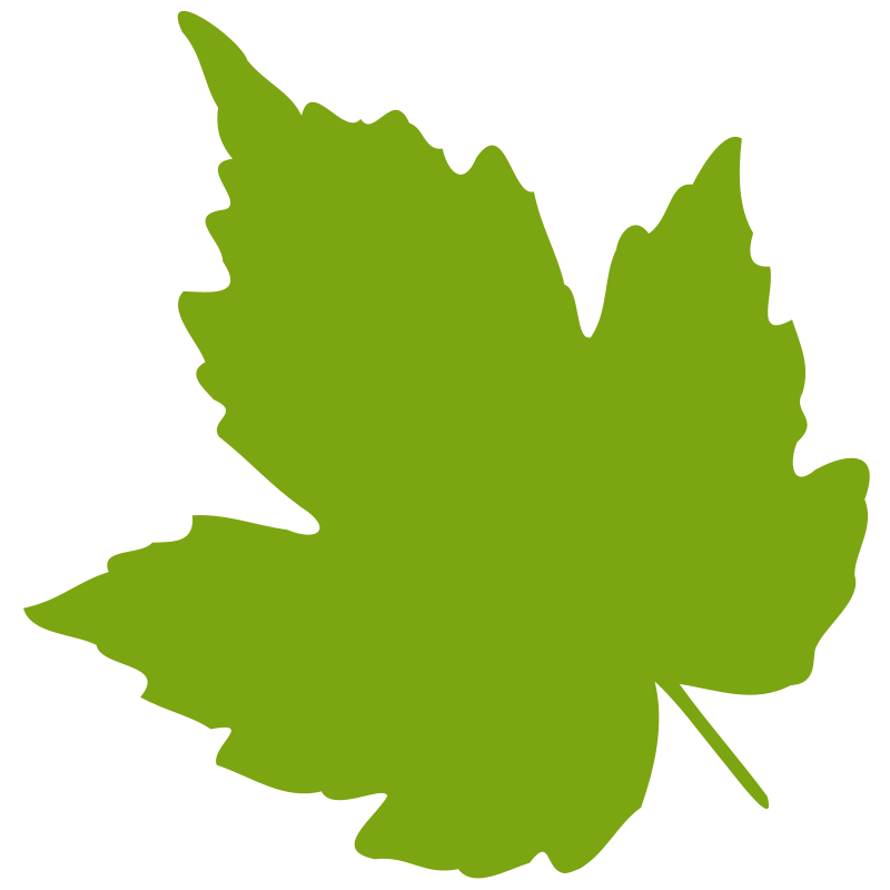 800x800 Leaf 04 Free Vector 4vector