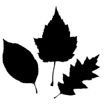 150x150 Leaf Silhouette Vector Image