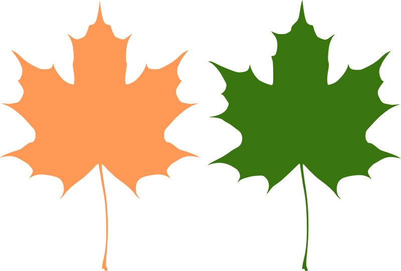 800x541 Maple Leaves Free Vector 4vector