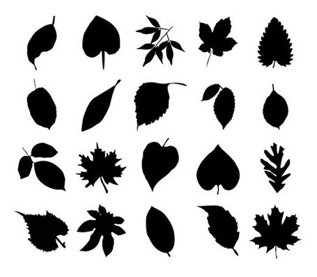 455x398 Vector Collection Of Leaf Silhouettes, Clipart