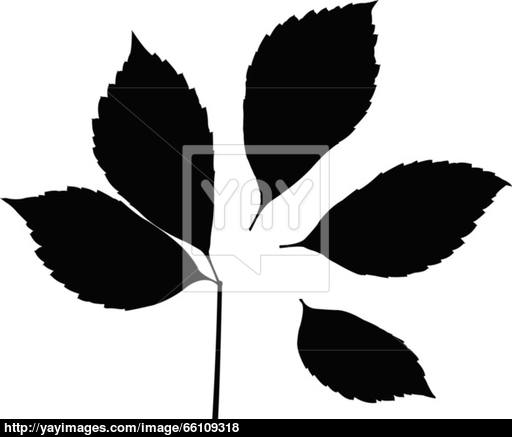 512x437 Leaf Silhouette Vector
