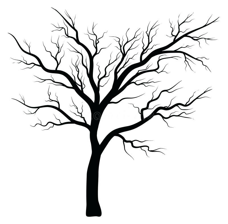 800x783 Bare Tree Silhouette Vector Symbol Icon Design Stock Vector