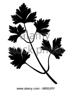 300x380 Parsley Leaves Silhouette Icon Vector Illustration Graphic Design